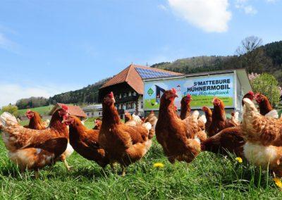 sMattebure Bauernhof - Hühnermobil und Milchtankstelle